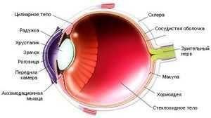 Як зберегти зір поради авіценни